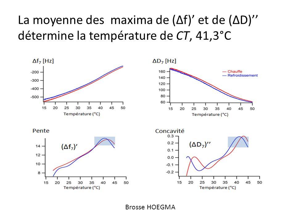 La moyenne des maxima de (Δf)' et de (ΔD)'' détermine la température de CT, 41,3°C