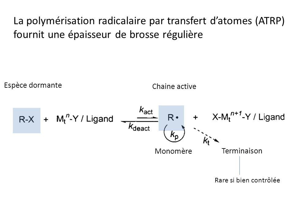 La polymérisation radicalaire par transfert d'atomes (ATRP) fournit une épaisseur de brosse régulière