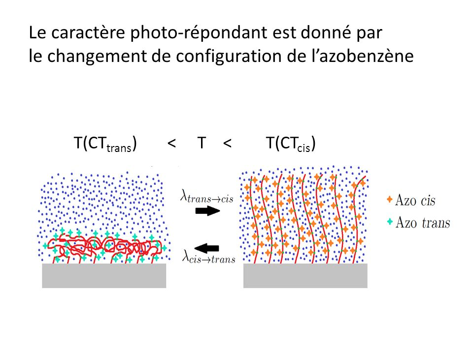 Le caractère photo-répondant est donné par le changement de configuration de l'azobenzène