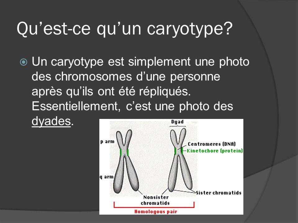 Qu'est-ce qu'un caryotype