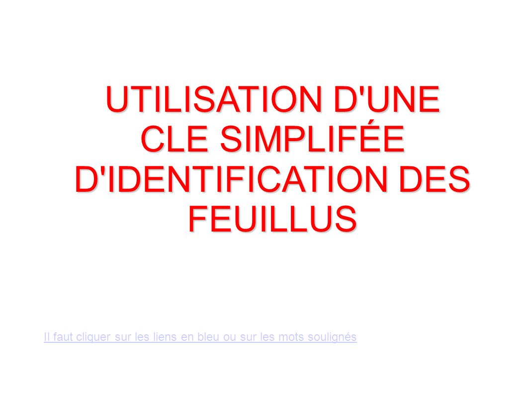 UTILISATION D UNE CLE SIMPLIFÉE D IDENTIFICATION DES FEUILLUS