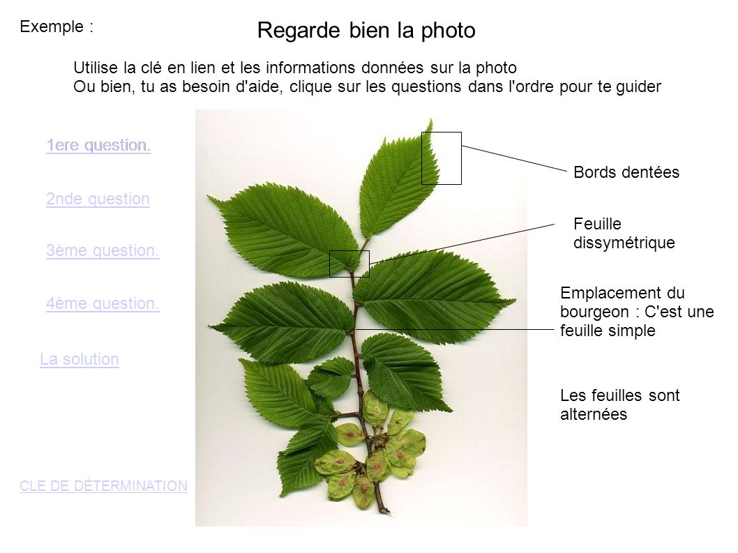 Regarde bien la photo Exemple :