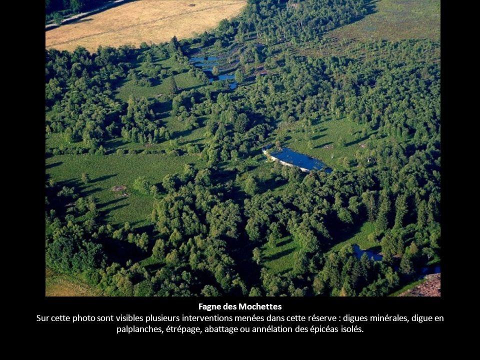 Fagne des Mochettes Sur cette photo sont visibles plusieurs interventions menées dans cette réserve : digues minérales, digue en palplanches, étrépage, abattage ou annélation des épicéas isolés.
