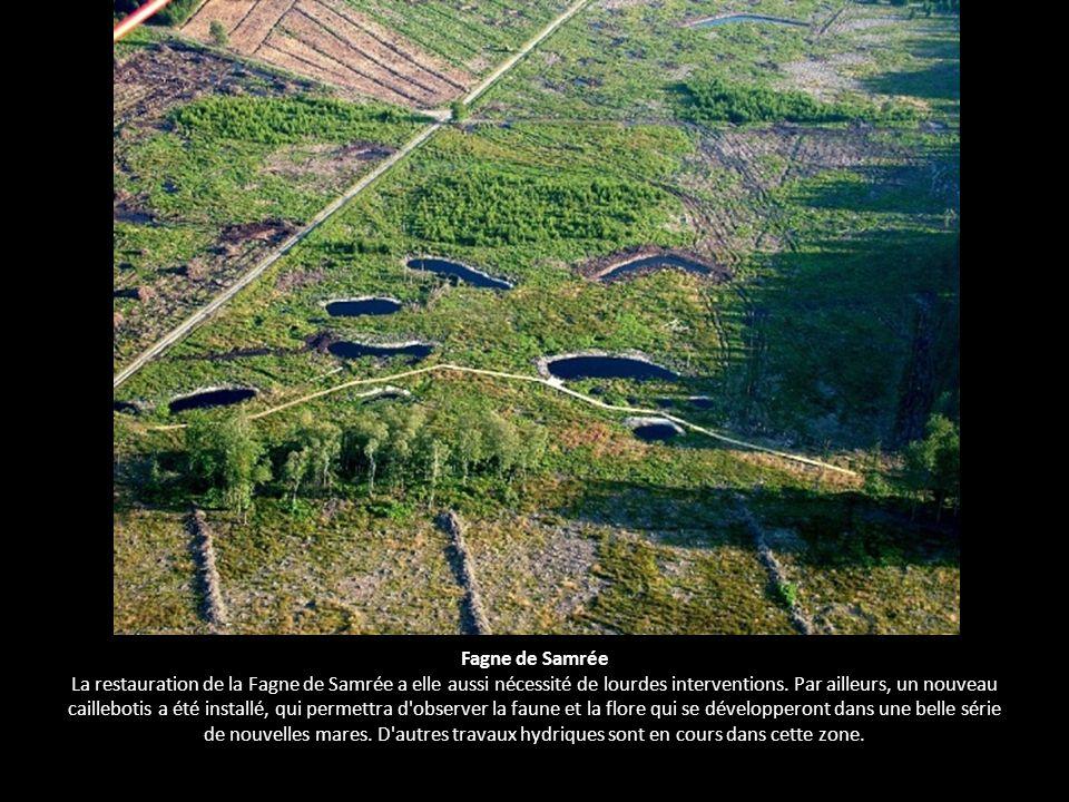 Fagne de Samrée La restauration de la Fagne de Samrée a elle aussi nécessité de lourdes interventions.
