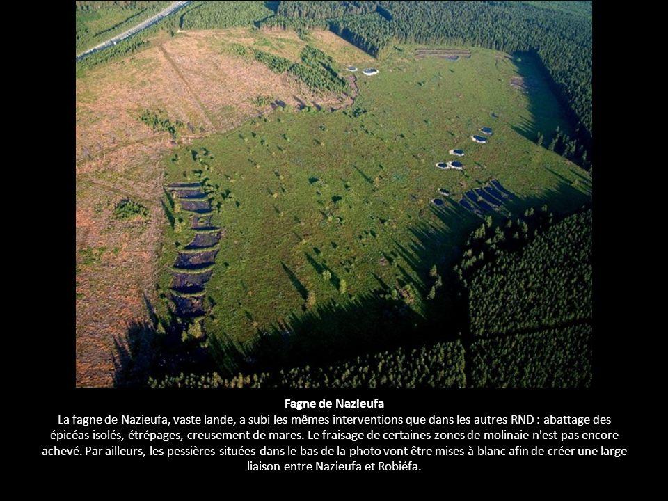 Fagne de Nazieufa La fagne de Nazieufa, vaste lande, a subi les mêmes interventions que dans les autres RND : abattage des épicéas isolés, étrépages, creusement de mares.