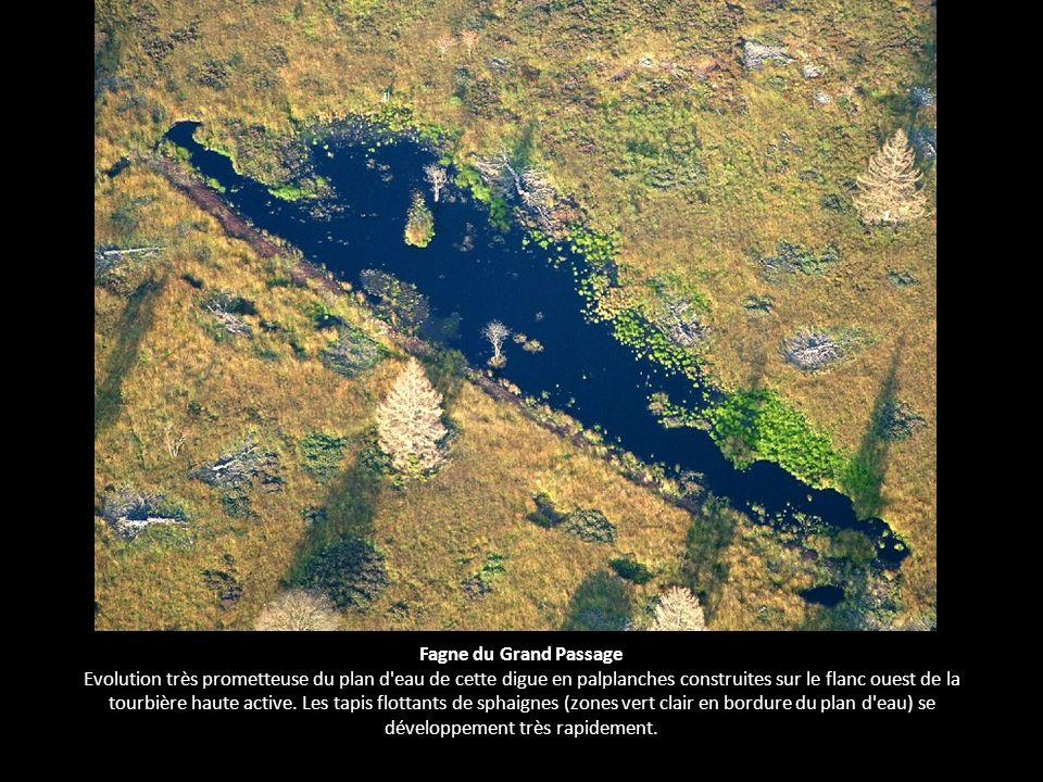 Fagne du Grand Passage Evolution très prometteuse du plan d eau de cette digue en palplanches construites sur le flanc ouest de la tourbière haute active.
