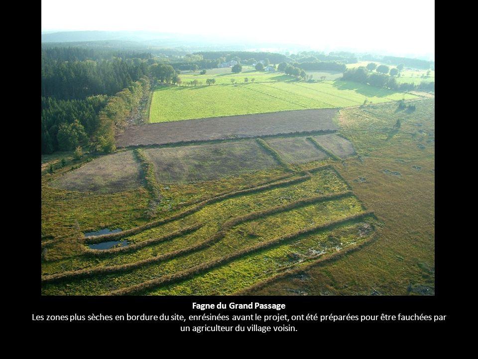 Fagne du Grand Passage Les zones plus sèches en bordure du site, enrésinées avant le projet, ont été préparées pour être fauchées par un agriculteur du village voisin.