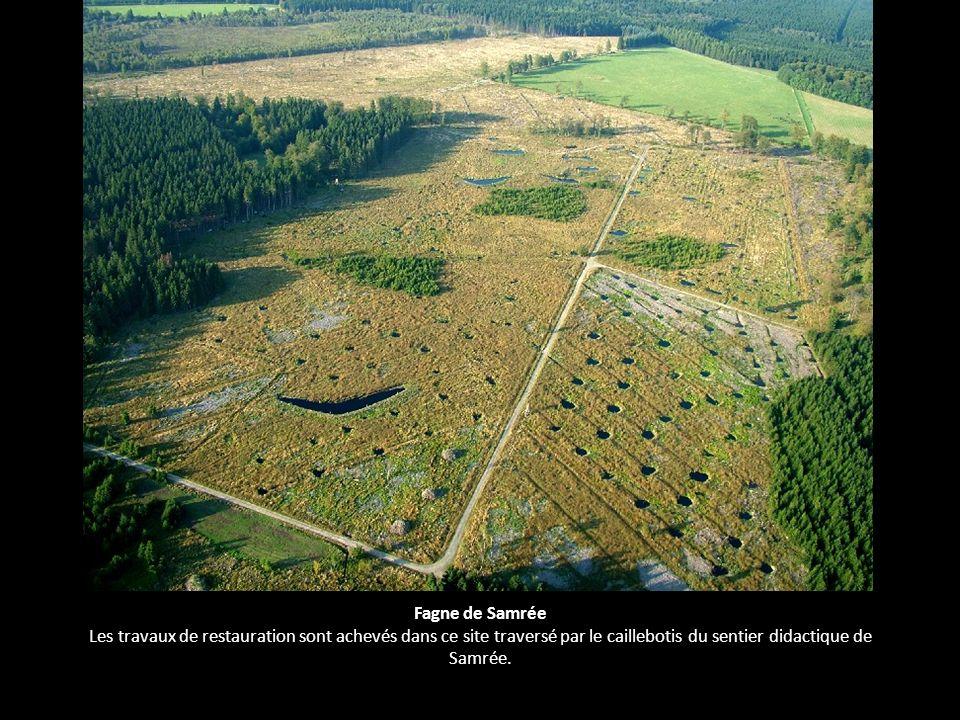 Fagne de Samrée Les travaux de restauration sont achevés dans ce site traversé par le caillebotis du sentier didactique de Samrée.