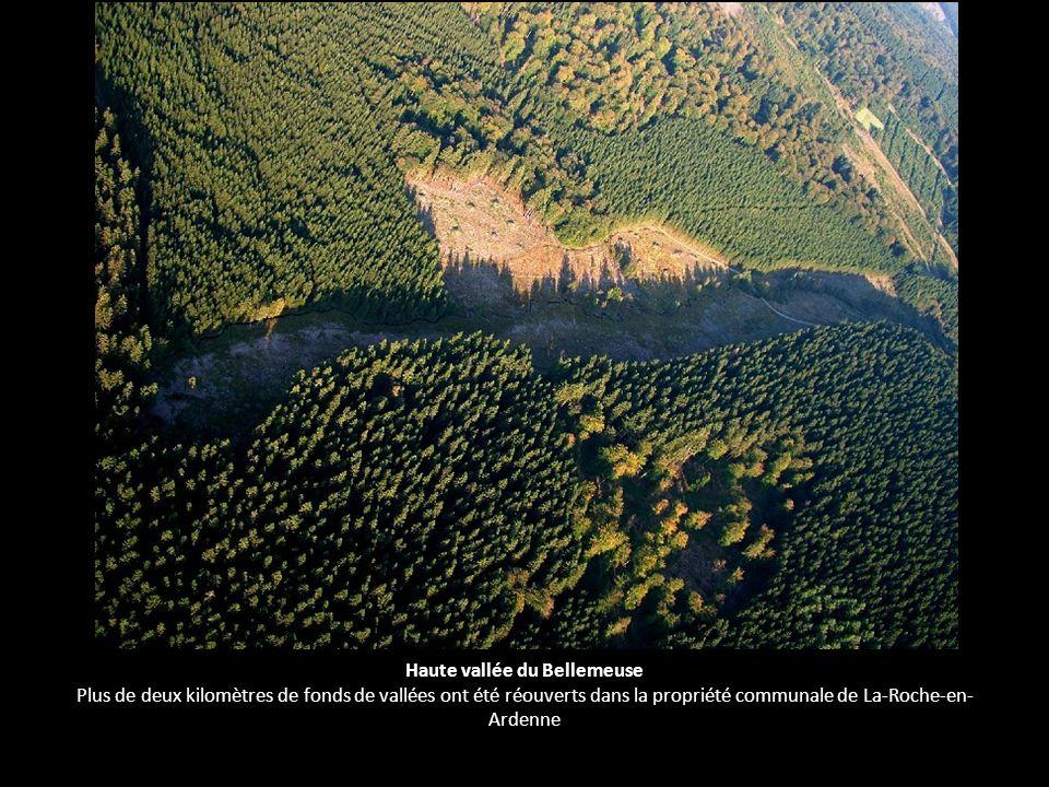 Haute vallée du Bellemeuse Plus de deux kilomètres de fonds de vallées ont été réouverts dans la propriété communale de La-Roche-en-Ardenne