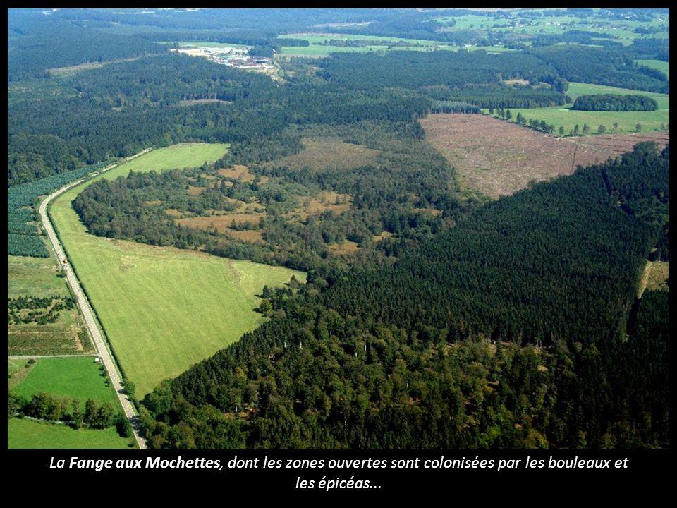 La Fange aux Mochettes, dont les zones ouvertes sont colonisées par les bouleaux et les épicéas...