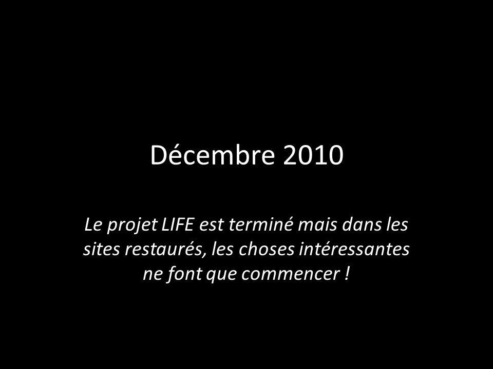 Décembre 2010 Le projet LIFE est terminé mais dans les sites restaurés, les choses intéressantes ne font que commencer !
