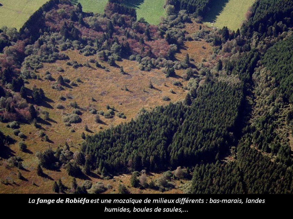 La fange de Robiéfa est une mozaïque de milieux différents : bas-marais, landes humides, boules de saules,...