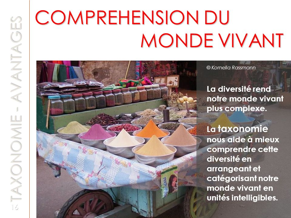 COMPREHENSION DU MONDE VIVANT