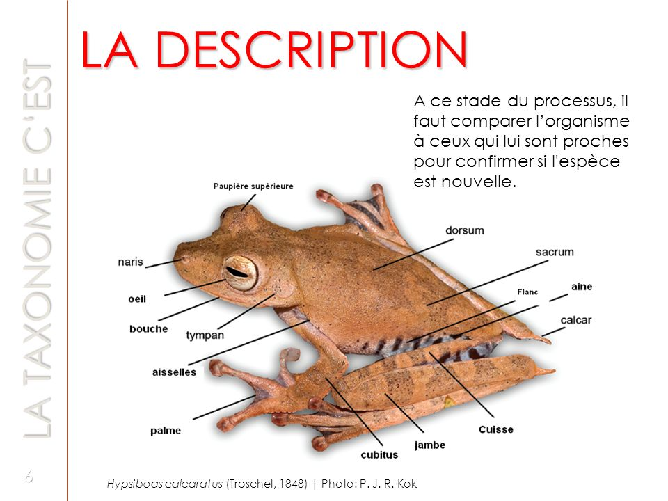 LA DESCRIPTION LA TAXONOMIE C'EST