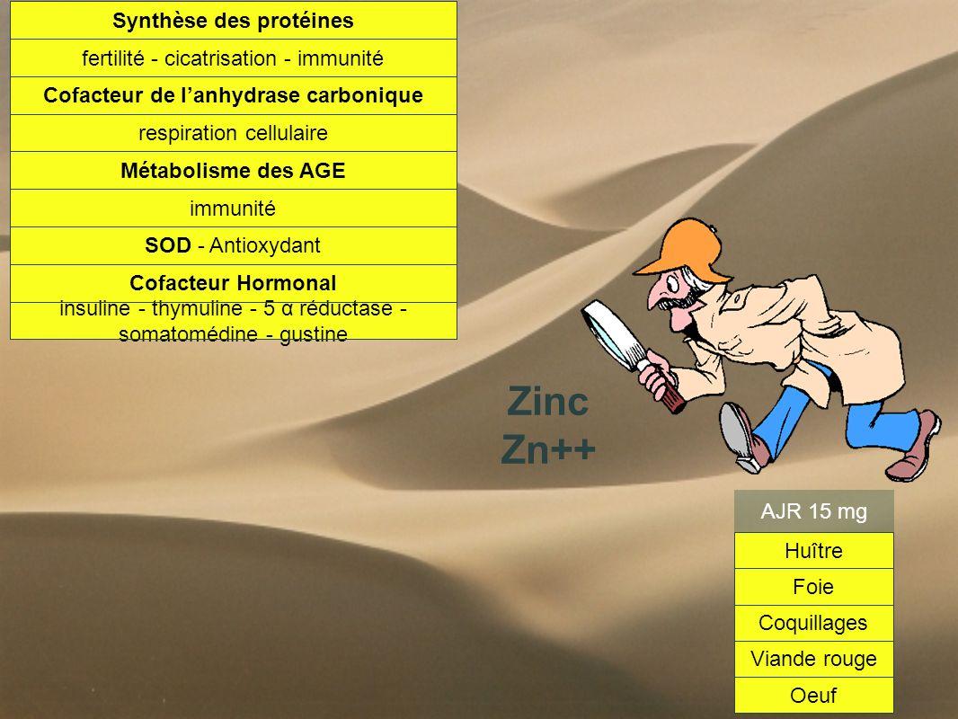 Synthèse des protéines Cofacteur de l'anhydrase carbonique