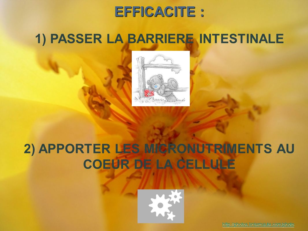 EFFICACITE : 1) PASSER LA BARRIERE INTESTINALE