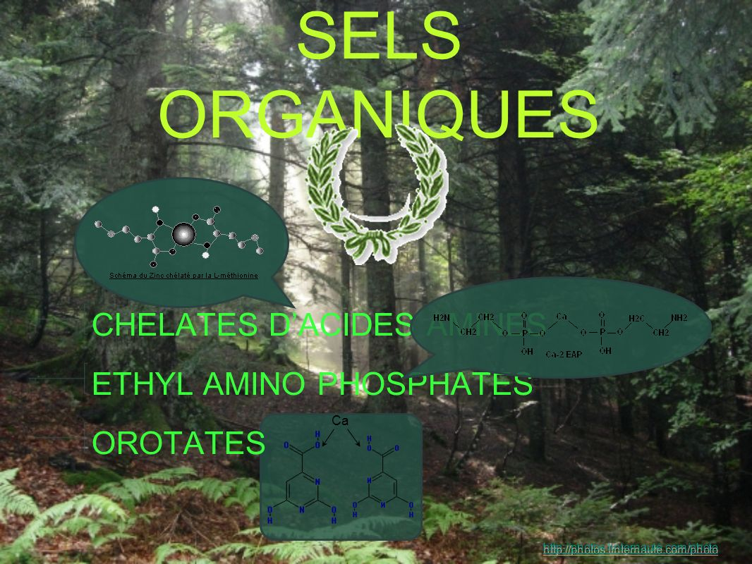 SELS ORGANIQUES CHELATES D'ACIDES AMINES ETHYL AMINO PHOSPHATES