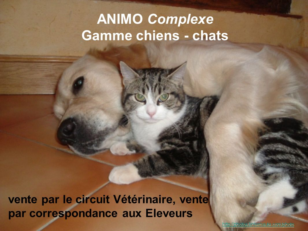ANIMO Complexe Gamme chiens - chats