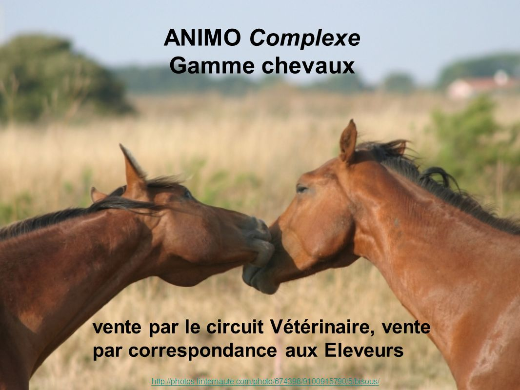 ANIMO Complexe Gamme chevaux