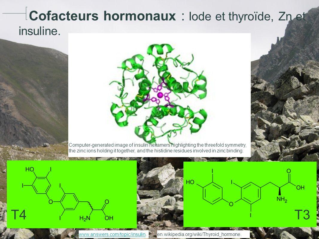 Cofacteurs hormonaux : Iode et thyroïde, Zn et insuline.