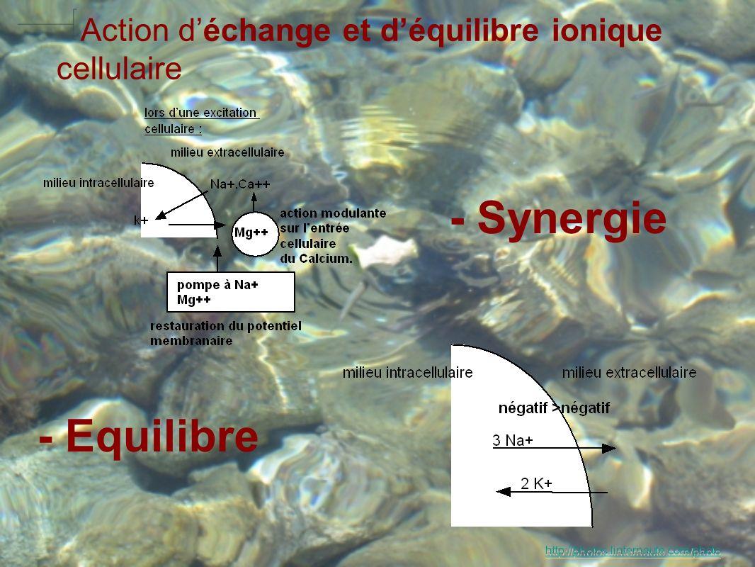 Action d'échange et d'équilibre ionique cellulaire