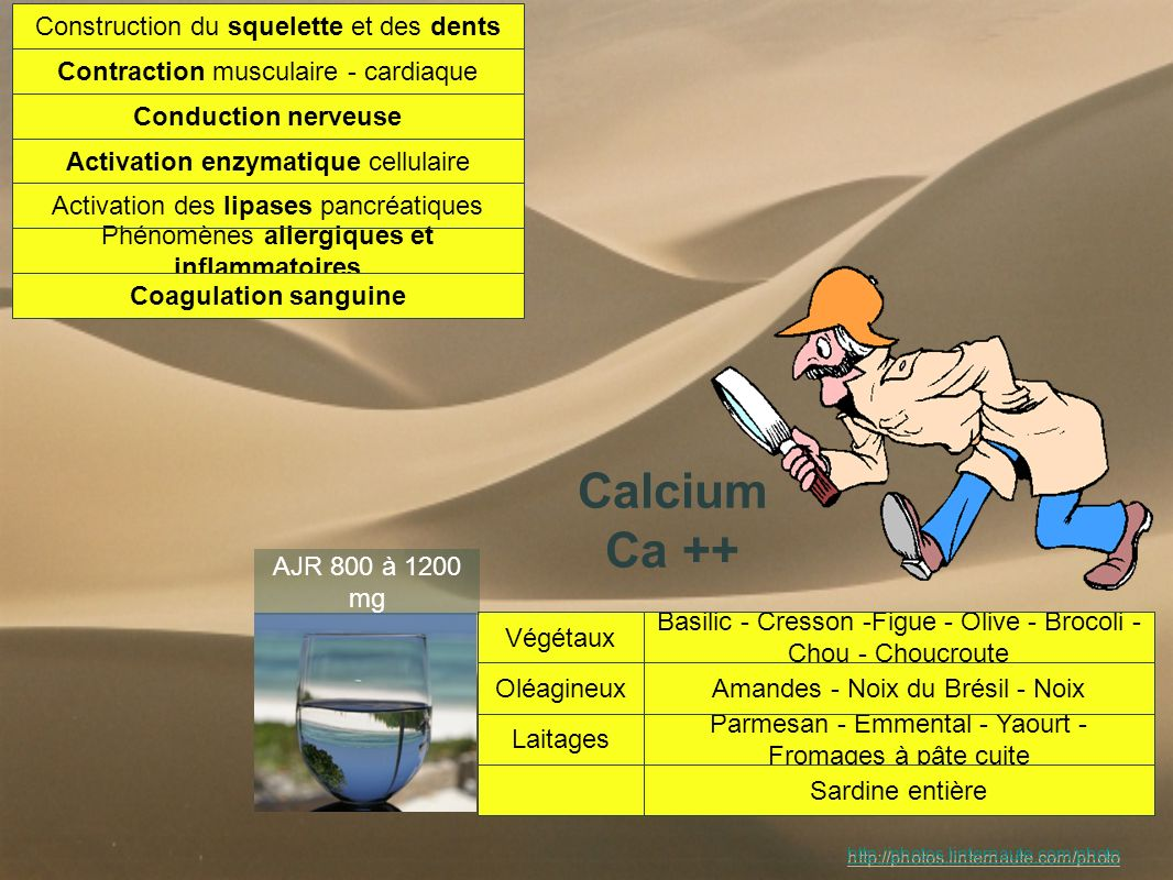 Calcium Ca ++ Construction du squelette et des dents