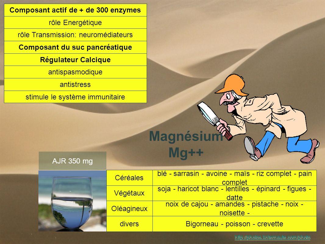 Composant actif de + de 300 enzymes Composant du suc pancréatique