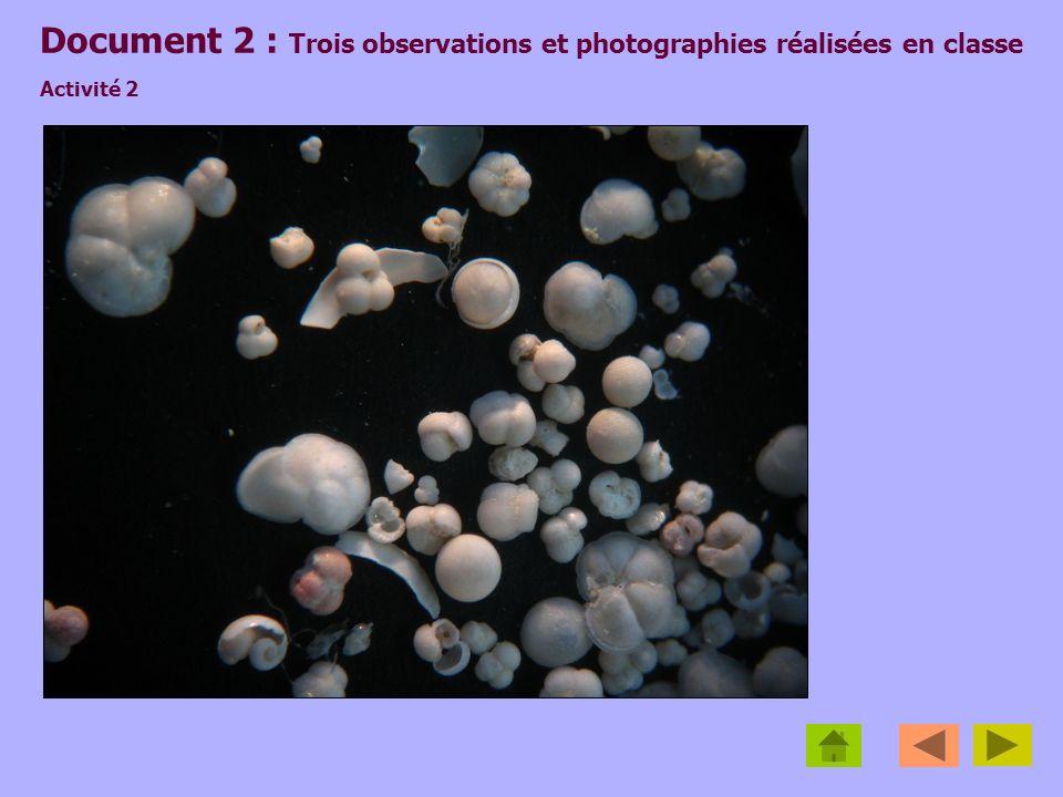Document 2 : Trois observations et photographies réalisées en classe