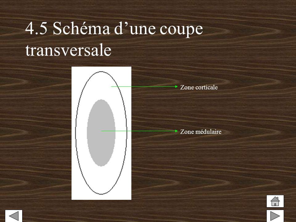 4.5 Schéma d'une coupe transversale
