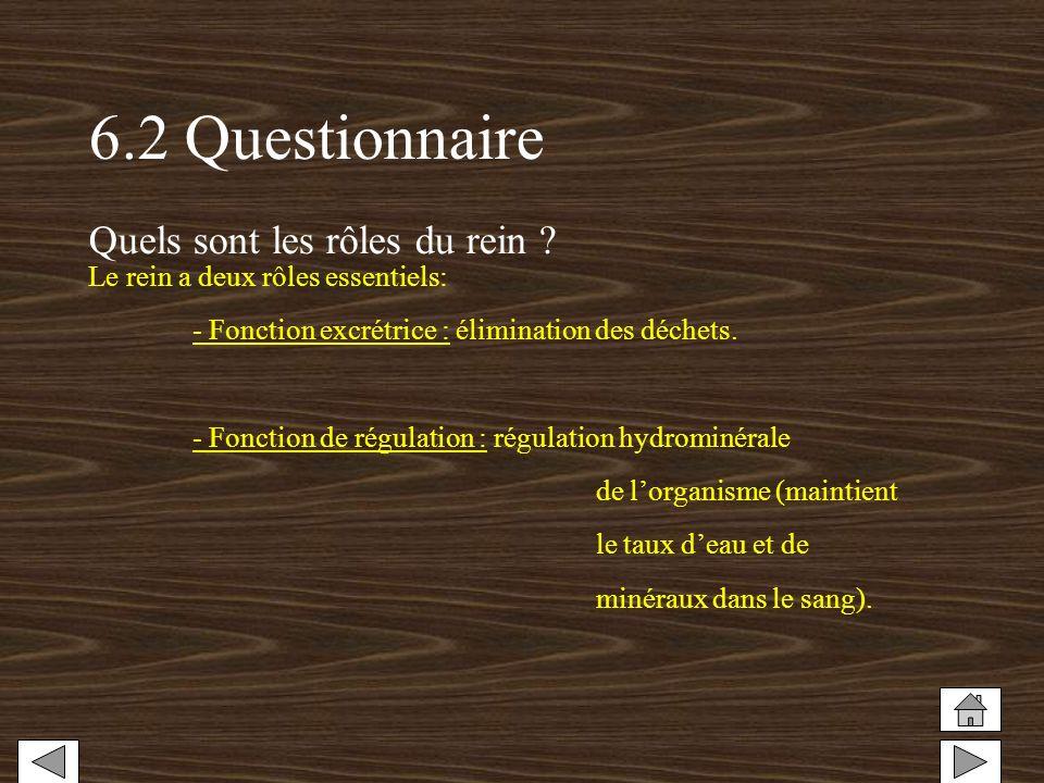 6.2 Questionnaire Quels sont les rôles du rein