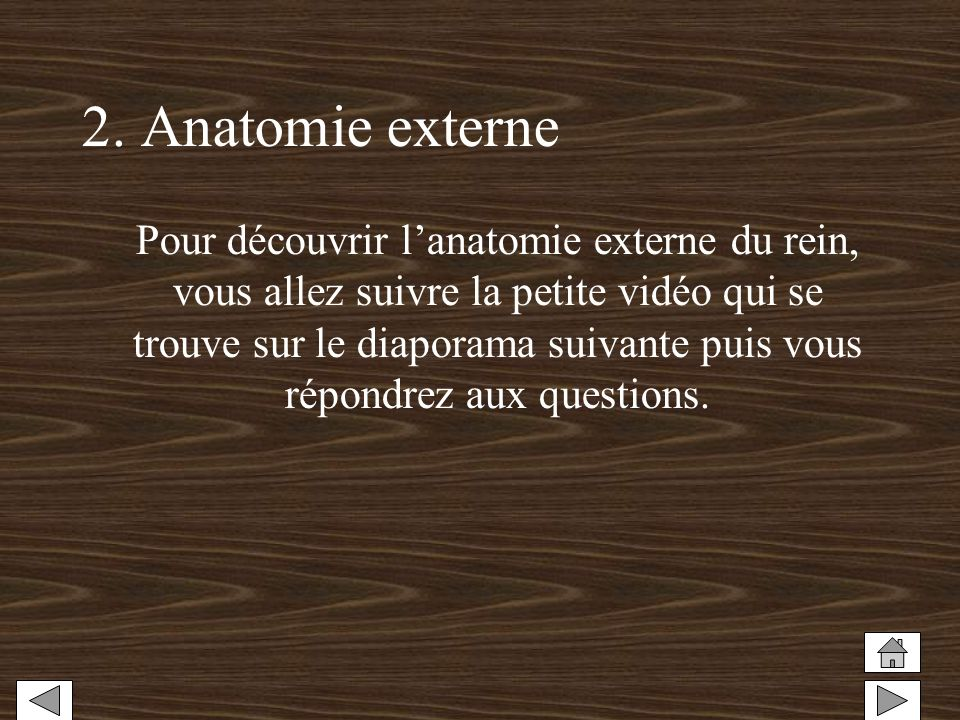 2. Anatomie externe