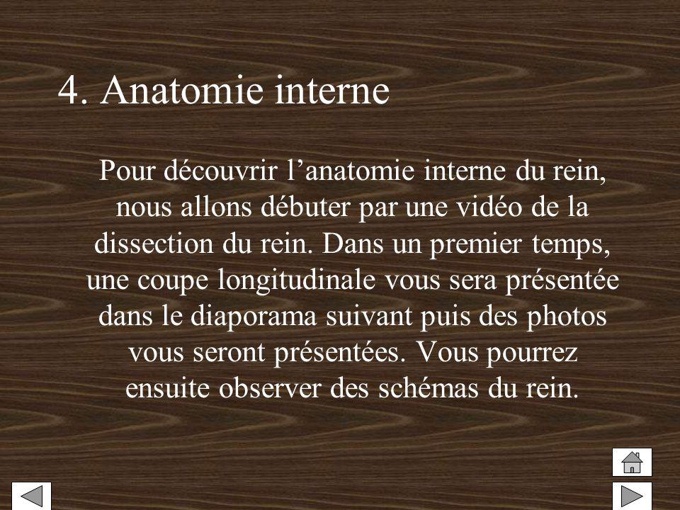 4. Anatomie interne