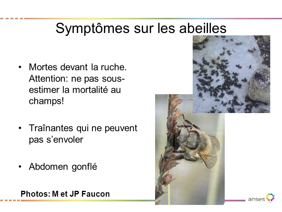Symptômes sur les abeilles