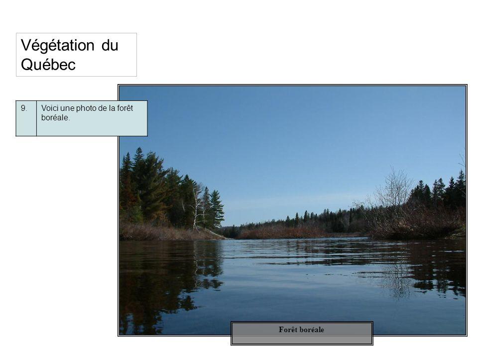 Végétation du Québec 9. Voici une photo de la forêt boréale.