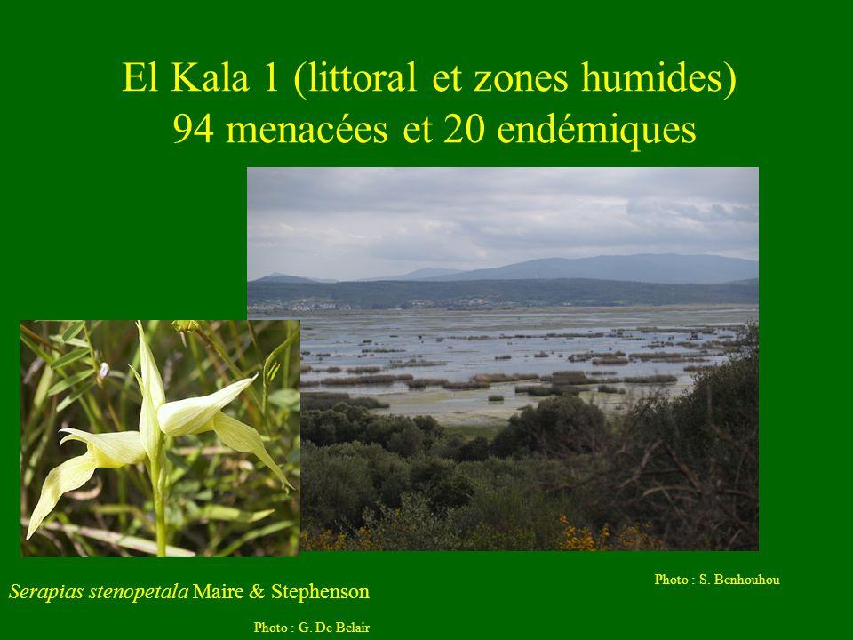 El Kala 1 (littoral et zones humides) 94 menacées et 20 endémiques