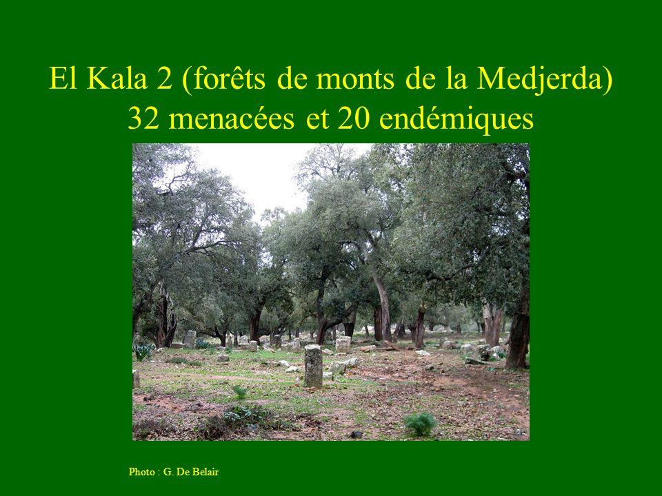 El Kala 2 (forêts de monts de la Medjerda) 32 menacées et 20 endémiques