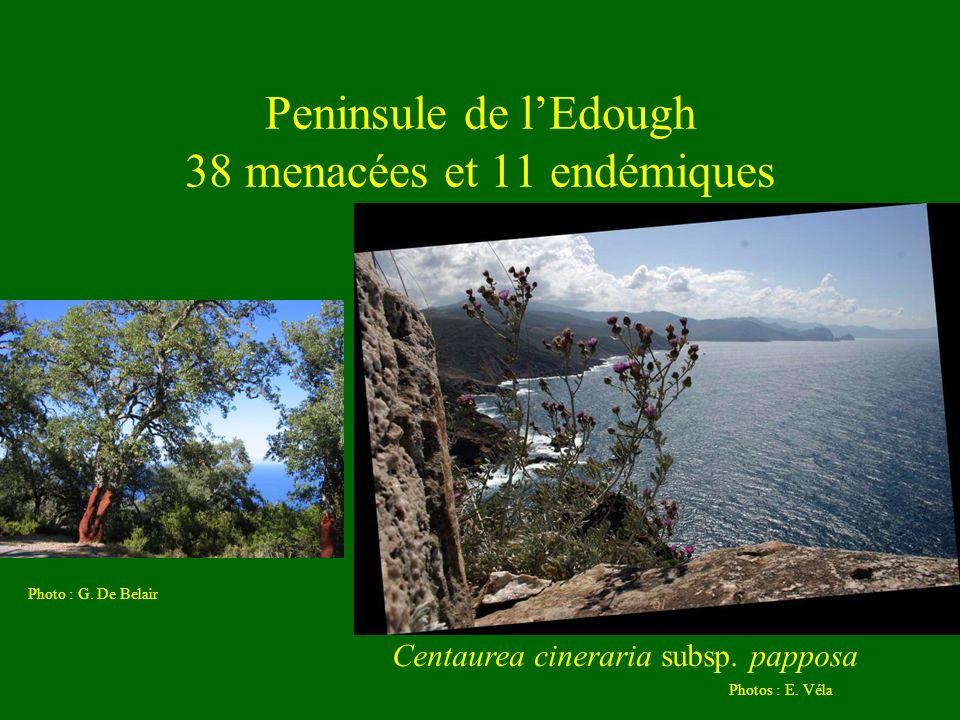 Peninsule de l'Edough 38 menacées et 11 endémiques