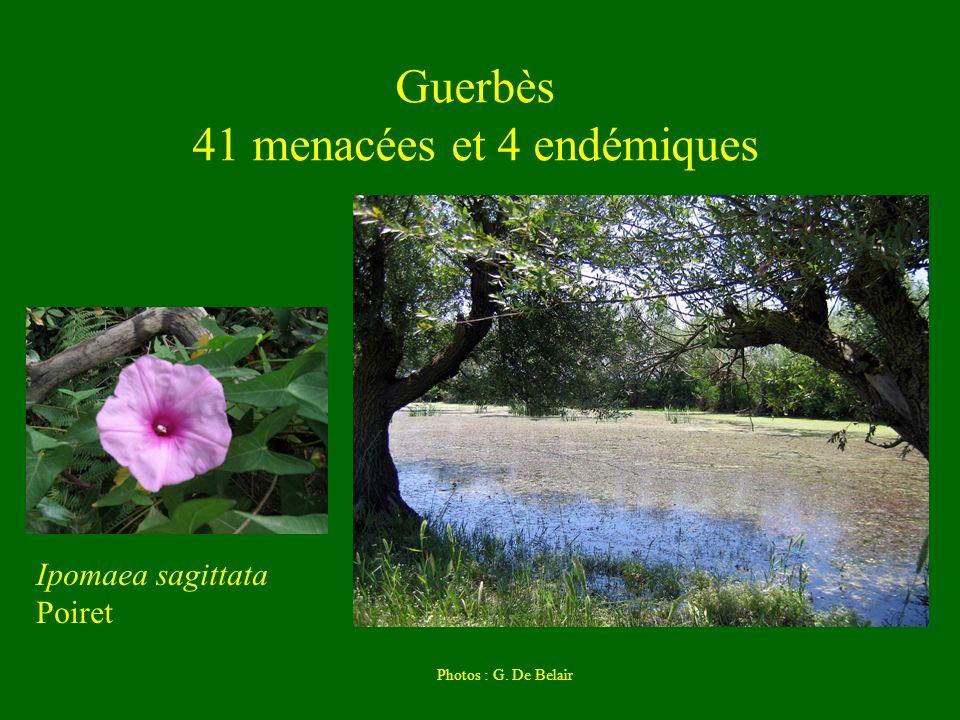 Guerbès 41 menacées et 4 endémiques
