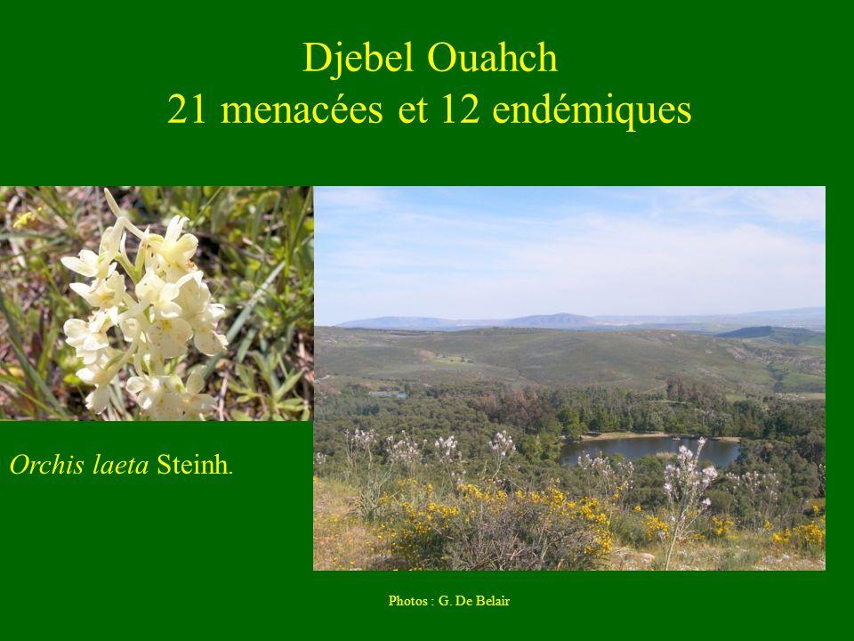 Djebel Ouahch 21 menacées et 12 endémiques