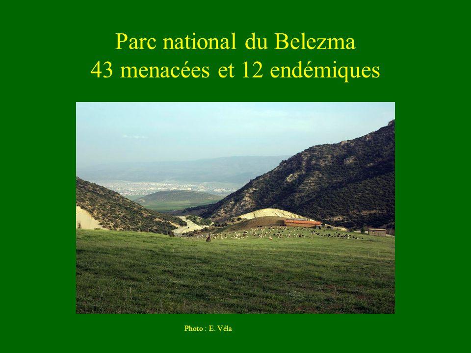 Parc national du Belezma 43 menacées et 12 endémiques
