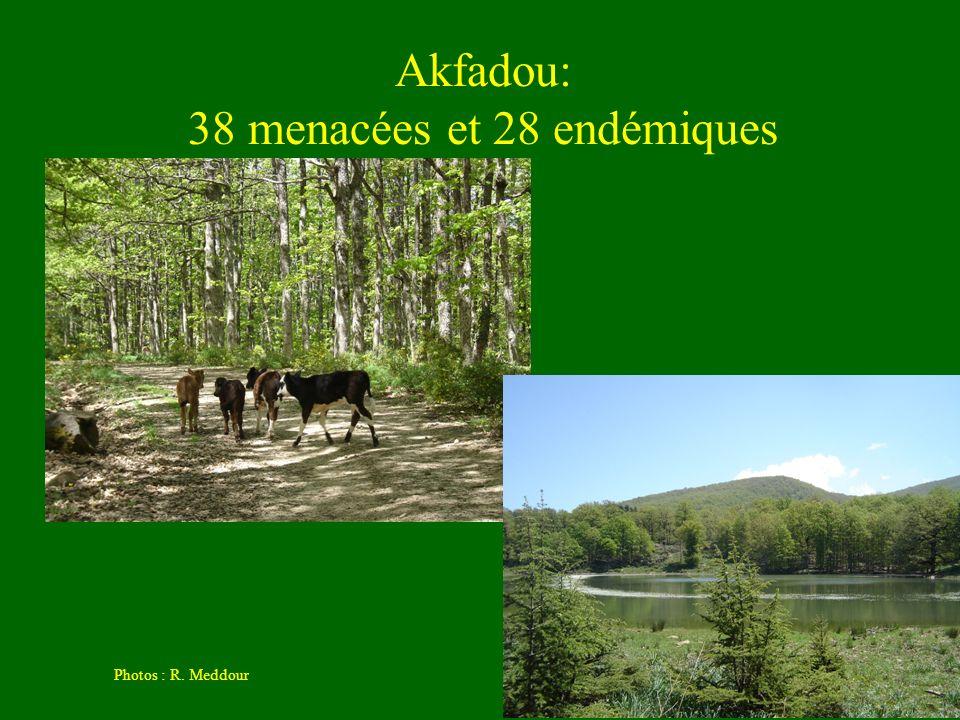 Akfadou: 38 menacées et 28 endémiques