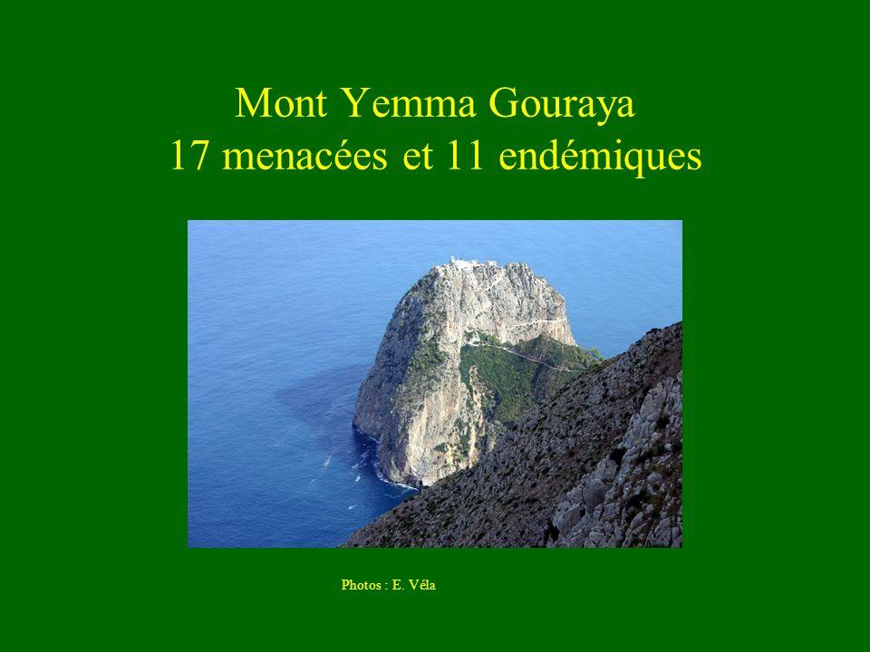 Mont Yemma Gouraya 17 menacées et 11 endémiques