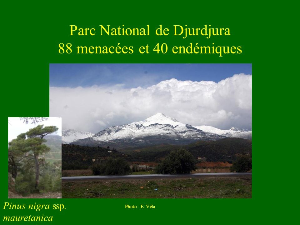 Parc National de Djurdjura 88 menacées et 40 endémiques