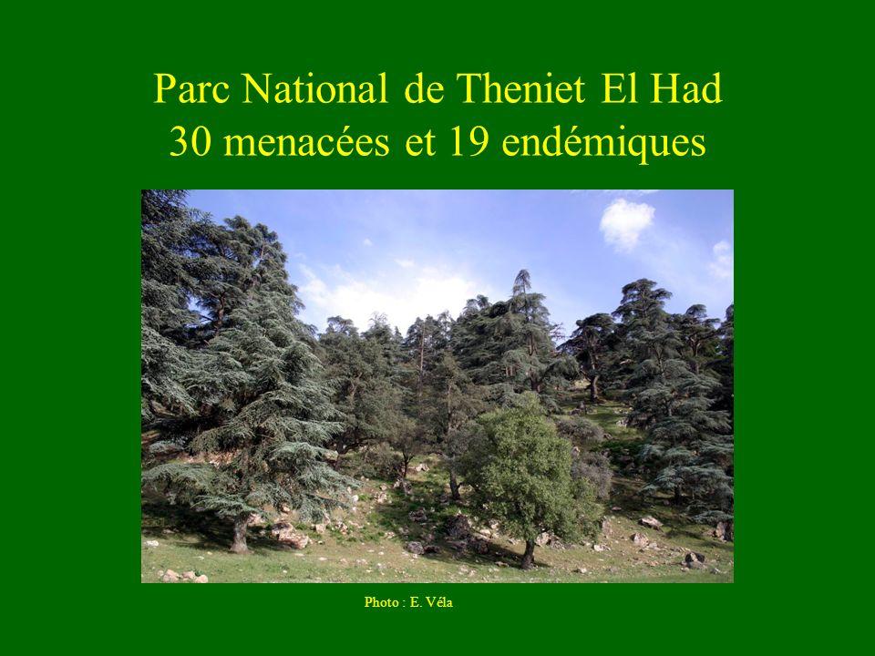 Parc National de Theniet El Had 30 menacées et 19 endémiques