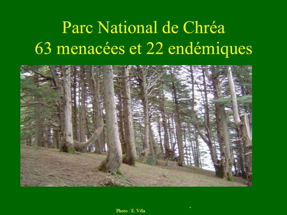 Parc National de Chréa 63 menacées et 22 endémiques