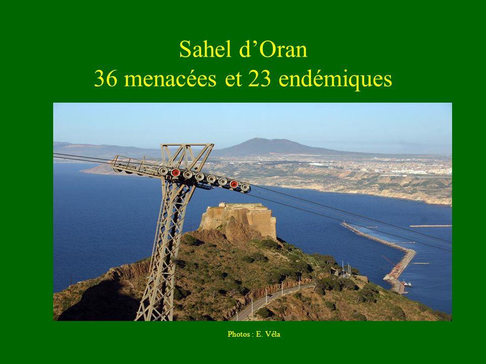 Sahel d'Oran 36 menacées et 23 endémiques