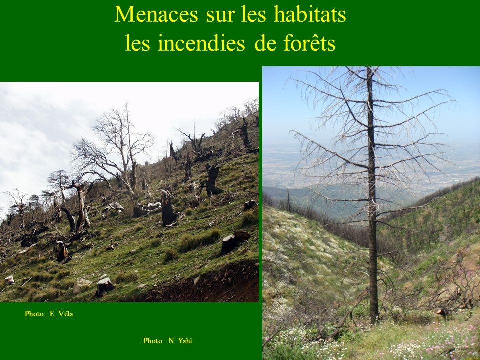 Menaces sur les habitats les incendies de forêts