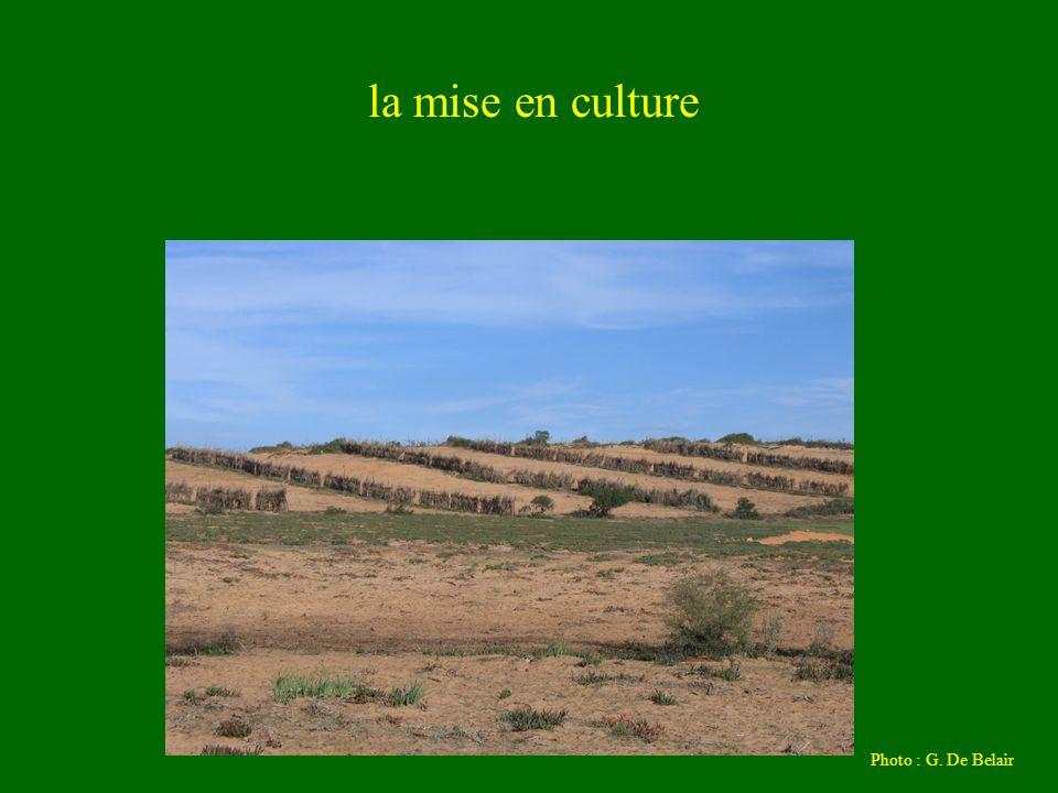 la mise en culture Photo : G. De Belair