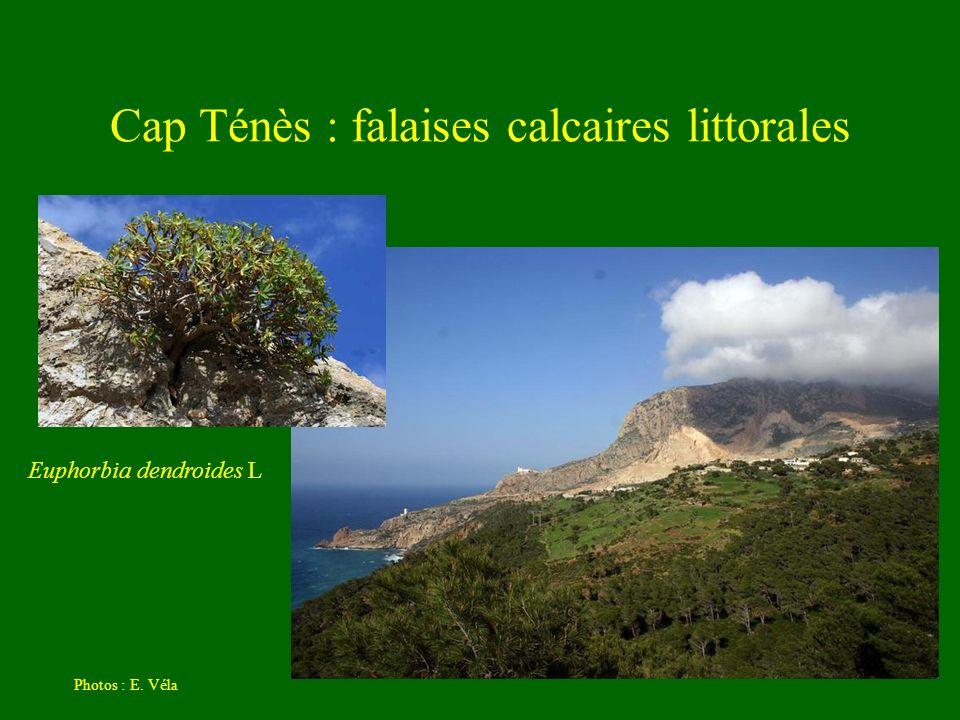 Cap Ténès : falaises calcaires littorales