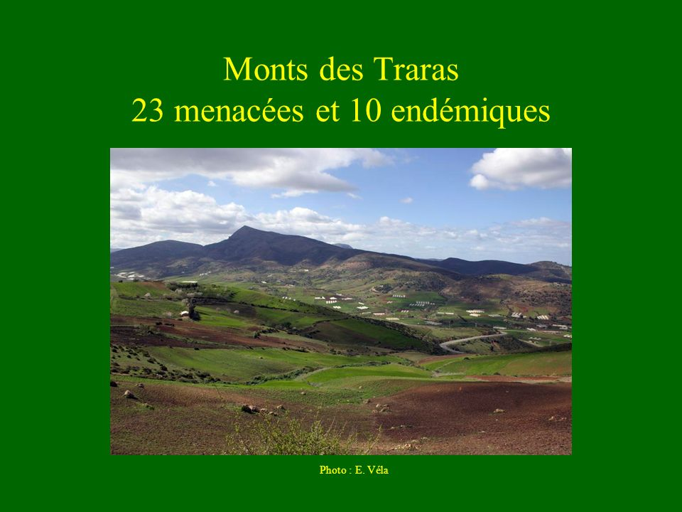 Monts des Traras 23 menacées et 10 endémiques